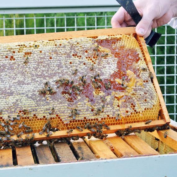 checking-honey-bees.jpg