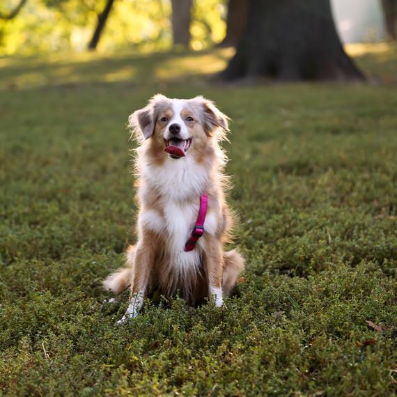 dog-leash-park-0415.jpg