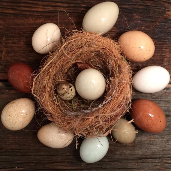 glaze-egg-nest-0215