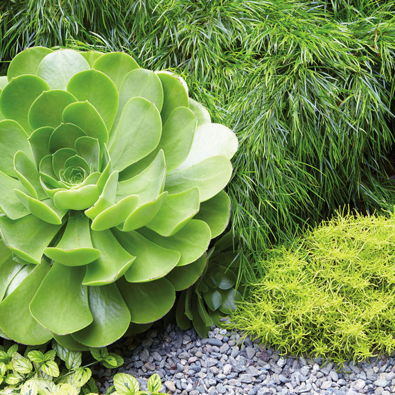 Grub Garden Serene outdoor space