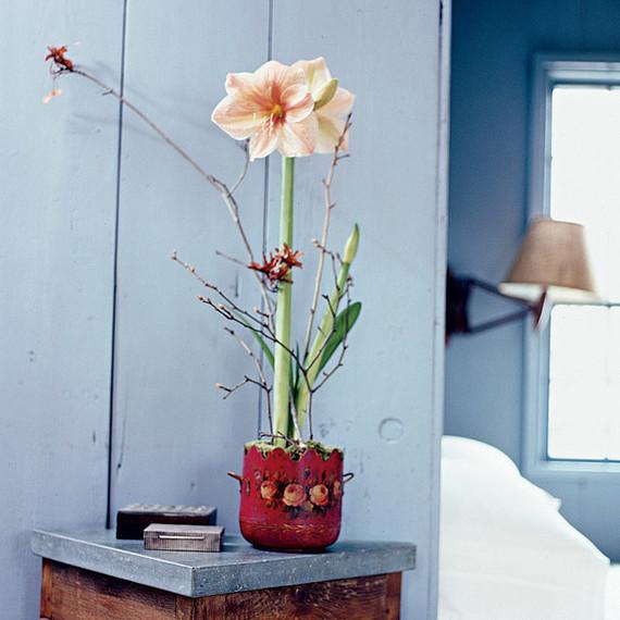 single amaryllis flower bulb on side table
