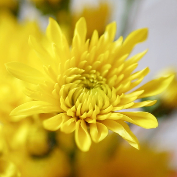 yellow-flowers-0914.jpg