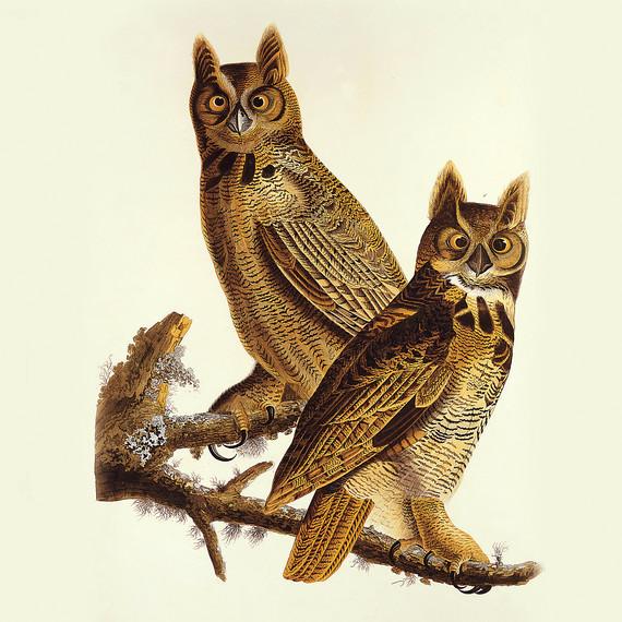birdbanners-ms111344.jpg