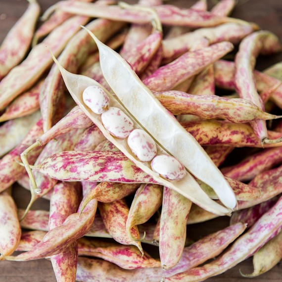 "Cranberry or ""Borlotti"" Beans"