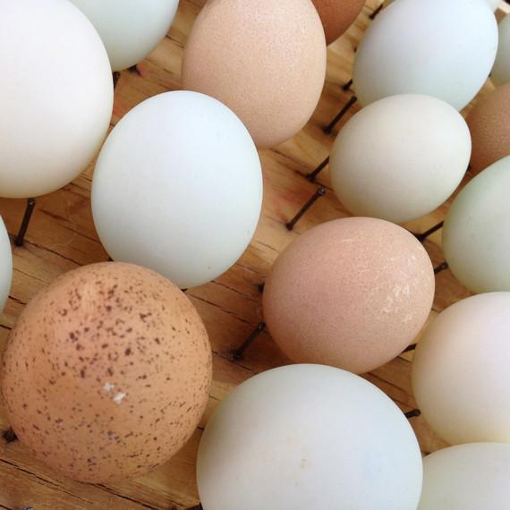 egg-drying-rack-0215.jpg