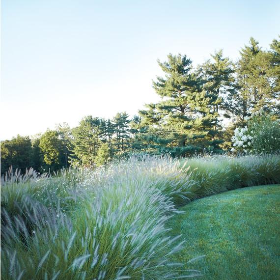grass-border-d110545.jpg