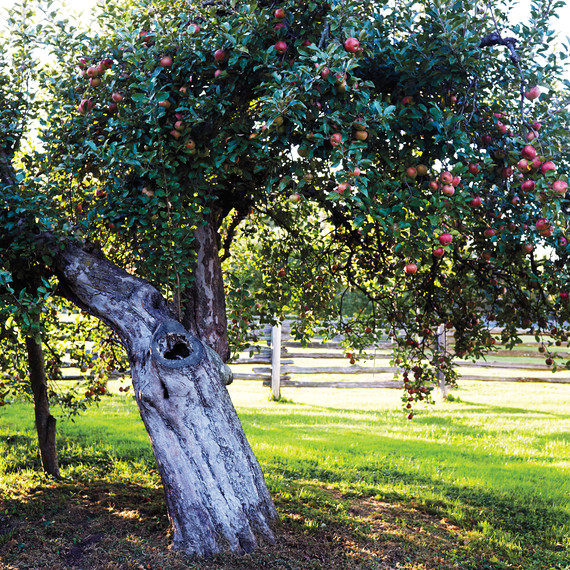 orchard-d110680-0444.jpg