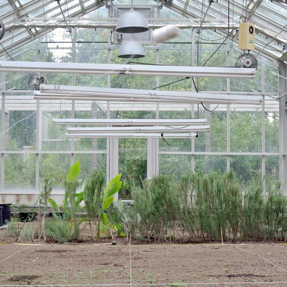 vegetable-greenhouse.jpg