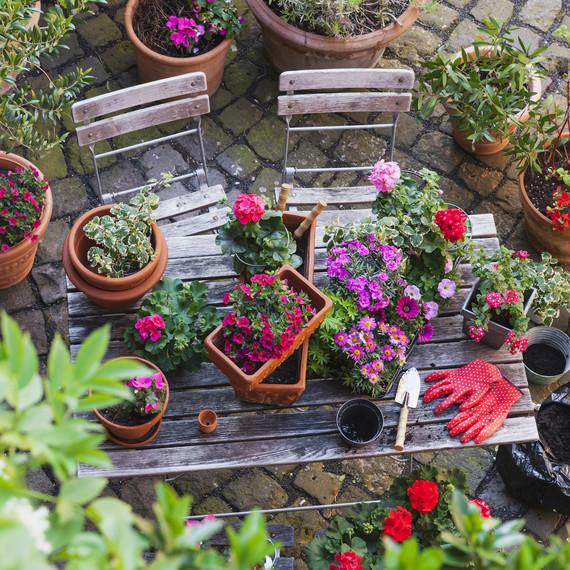 Here's How Gardening Benefits Your Health | Martha Stewart on winning garden club flower designs, standard flower show table designs, garden club underwater designs,