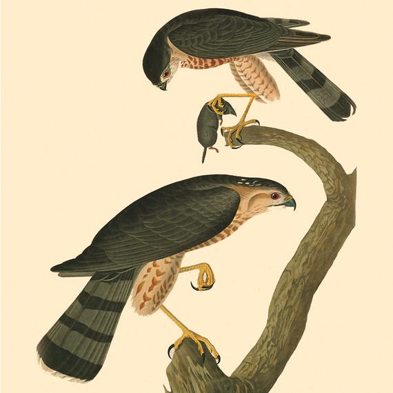 birdbanners5-ms111344.jpg