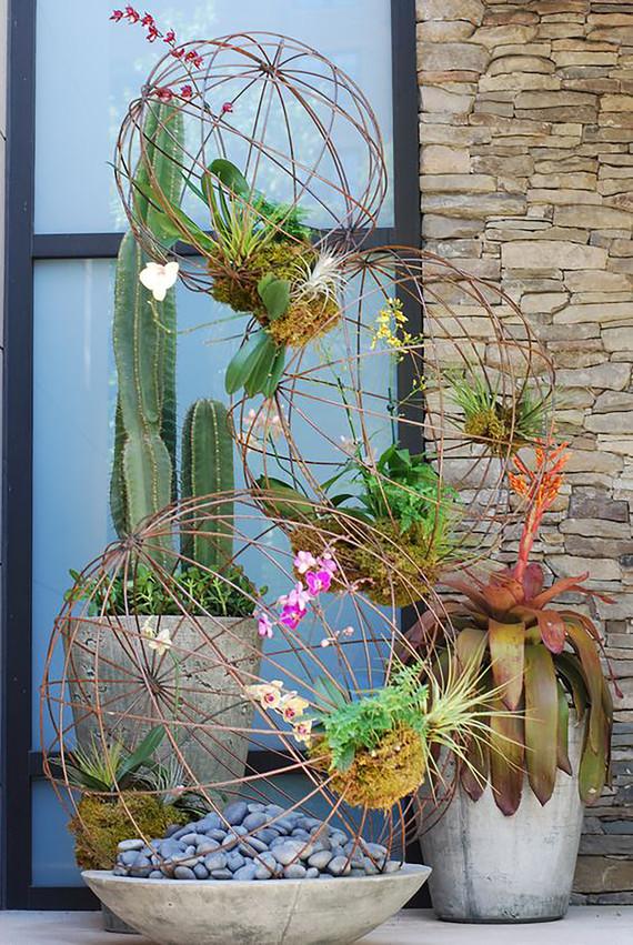 cactus-summer-annuals_editt.jpg (skyword:291902)