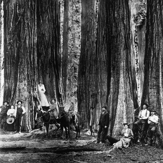 Visit the General Grant Tree: A Living Sequoia Called the