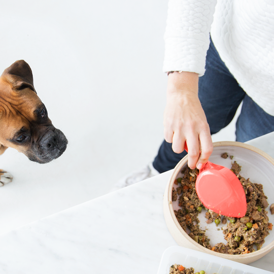 Ollie, the subscription box for dog food