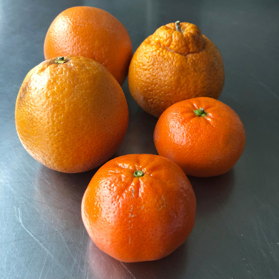 citrus fruit variety
