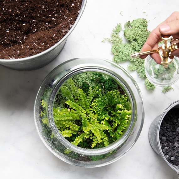 How To Make The Perfect Terrarium And Keep It Alive Martha Stewart