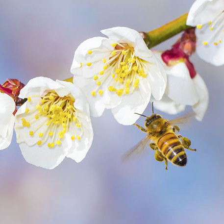 bee and flower stem