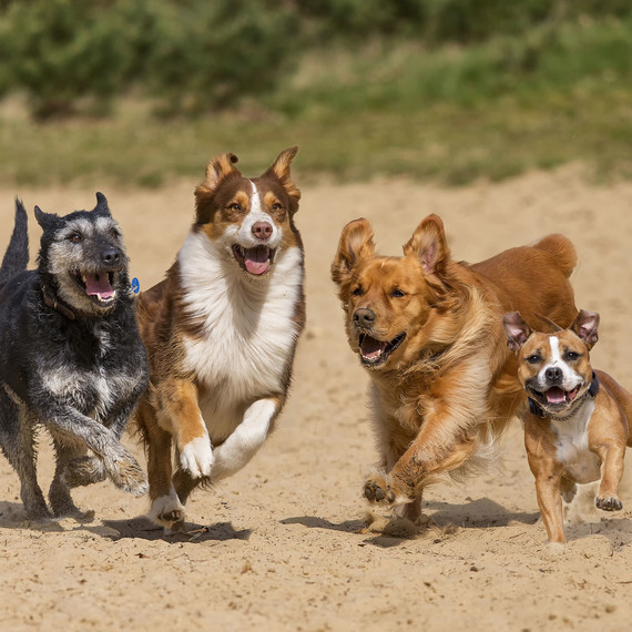 dogs-running-at-dog-park.jpg