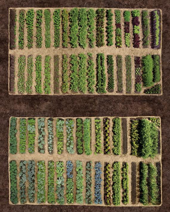 Planning your vegetable garden martha stewart for Best way to layout a vegetable garden