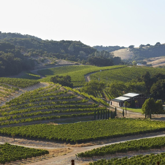 pasorobles-vineyard-0615