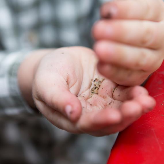 kids-gardening-seeds-0316.jpg (skyword:243073)