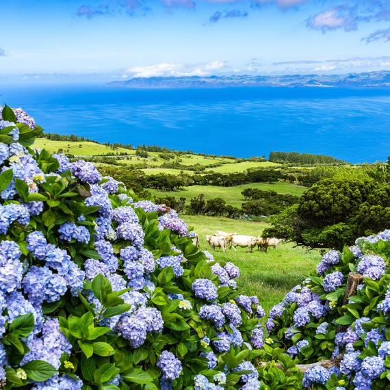 This Mid-Atlantic Island Is Every Hydrangea Lover's Dream