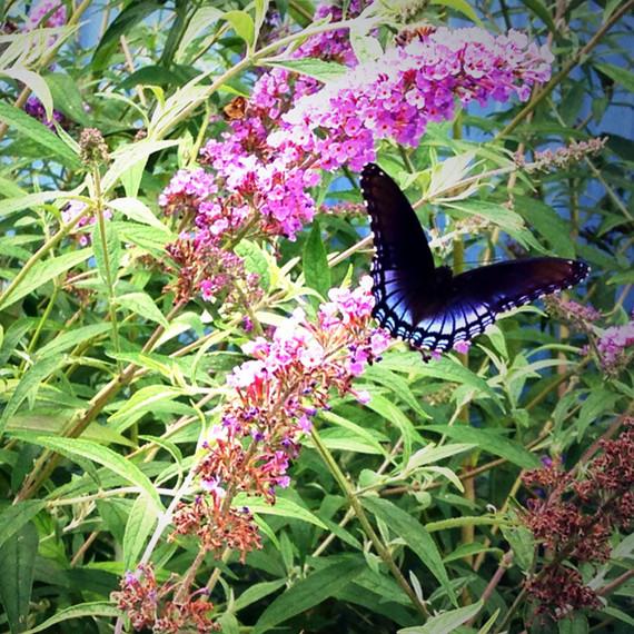 butterfly-waxing-kara-0614.jpg