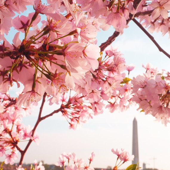 These Are the Four Best Cities to See Cherry Blossoms in 2019