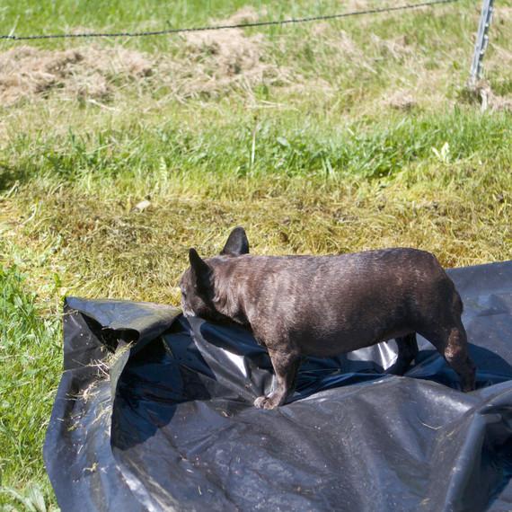 donkeypaddock-7039-fs-0614.jpg