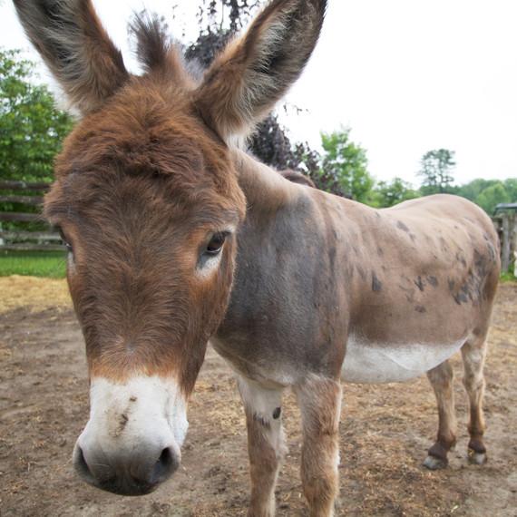 donkeypaddock-8486-fs-0614.jpg