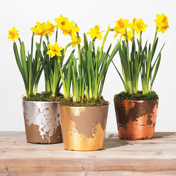 gold-leaf-pots-586-d111871_sq.jpg?itok=g