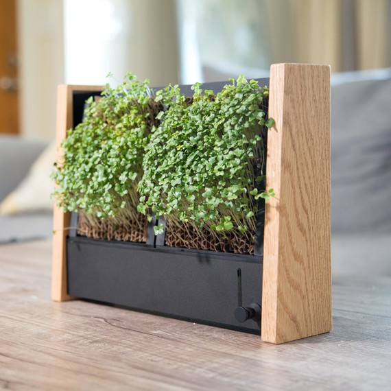 Grow micro vegetables indoors with this cool vertical garden micro veggie vertical garden indoor workwithnaturefo