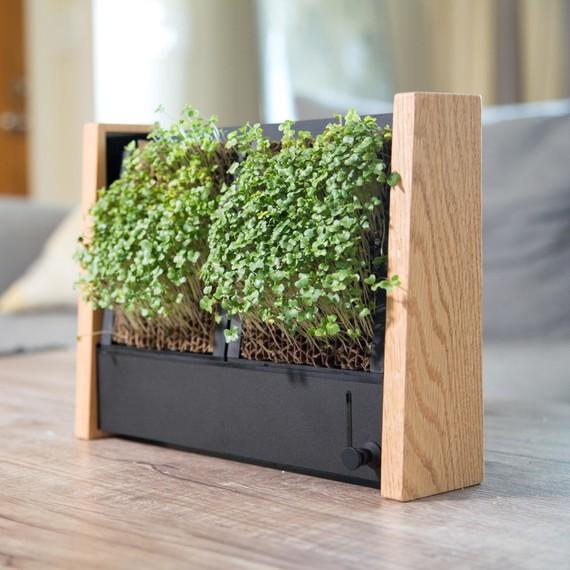 Micro Veggie Vertical Garden Indoor
