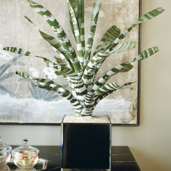 Pest Control: How to Get Rid of Common Houseplant Bugs