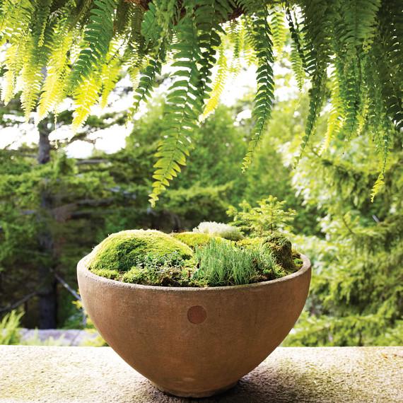 Moss Garden 0811mld106442b