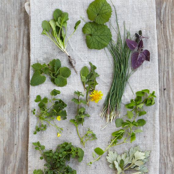 wild herbs opener