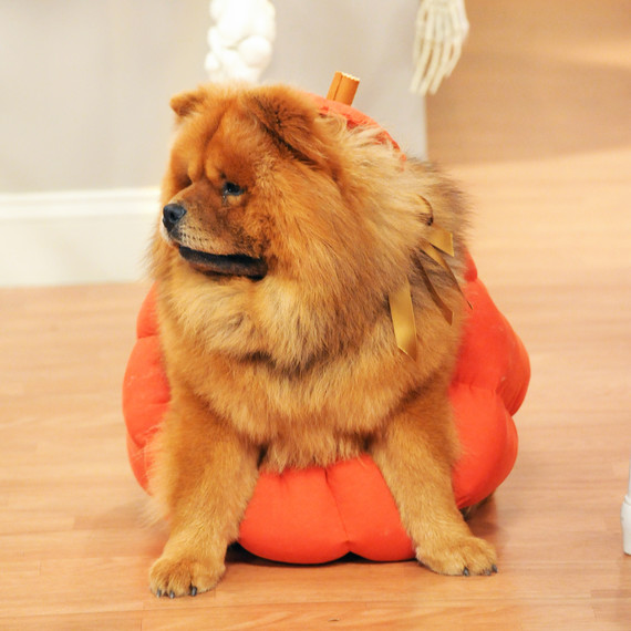 6034_102810_pumpkin_costume.jpg