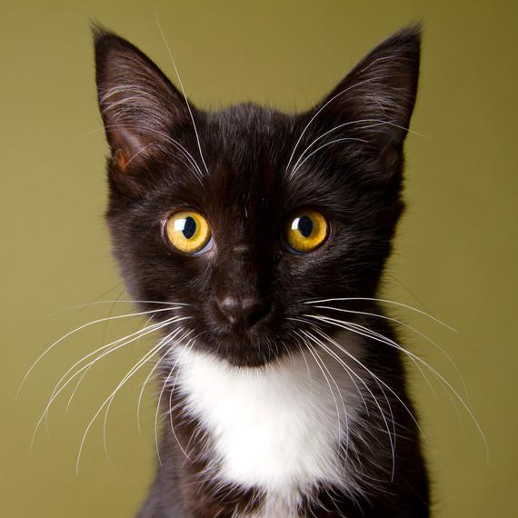 black-white-kitten-portrait.jpg