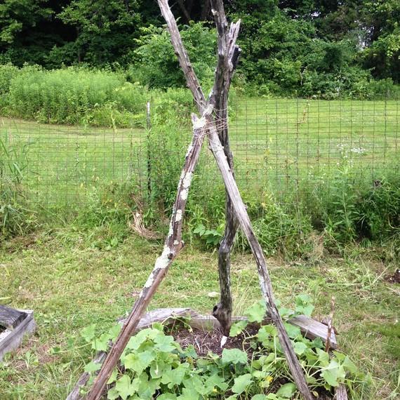 Good Cucumber Garden Teepee 0815