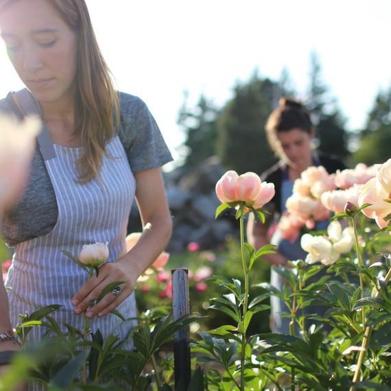 floret-harvesting-peonies-0.jpg