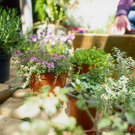 perennial garden flowers ready for planting