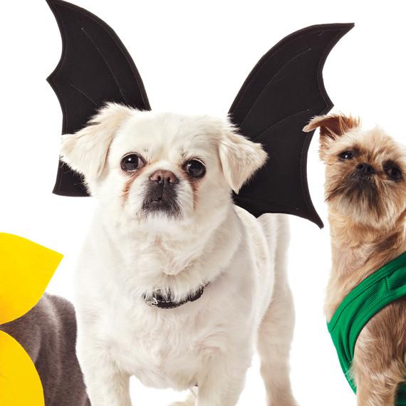 pet-costumes-1011mld107618d.jpg