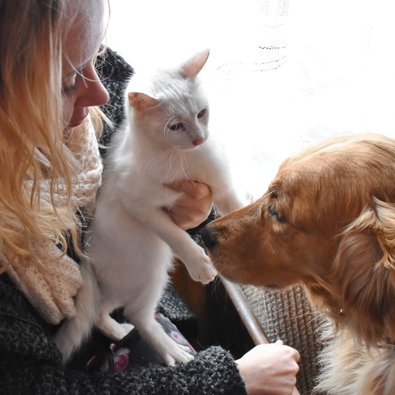 Five Things Cat and Dog Owners Have in Common
