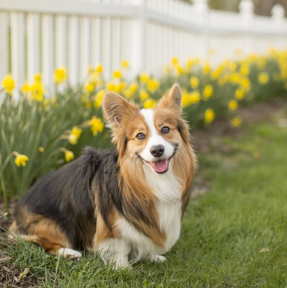 12 Garden Plants That Are Toxic to Dogs