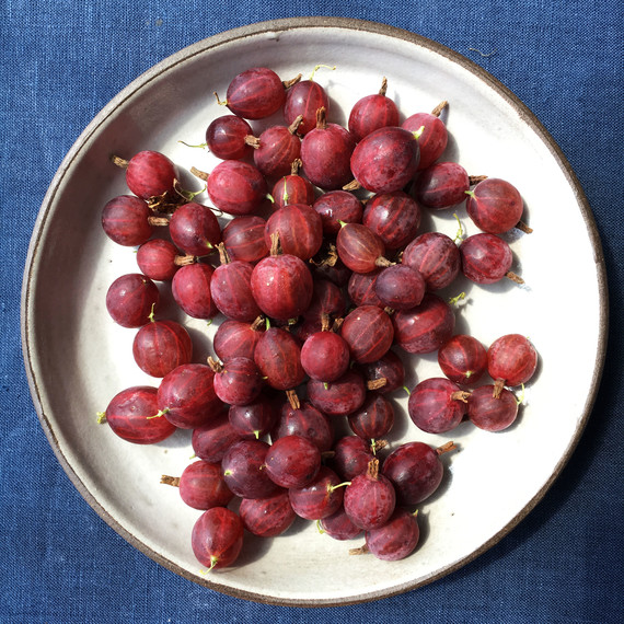 gooseberries 42 burners white plate blue background