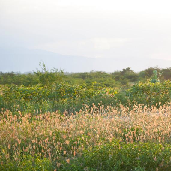 handinhand-haiti-meadow-1114.jpg