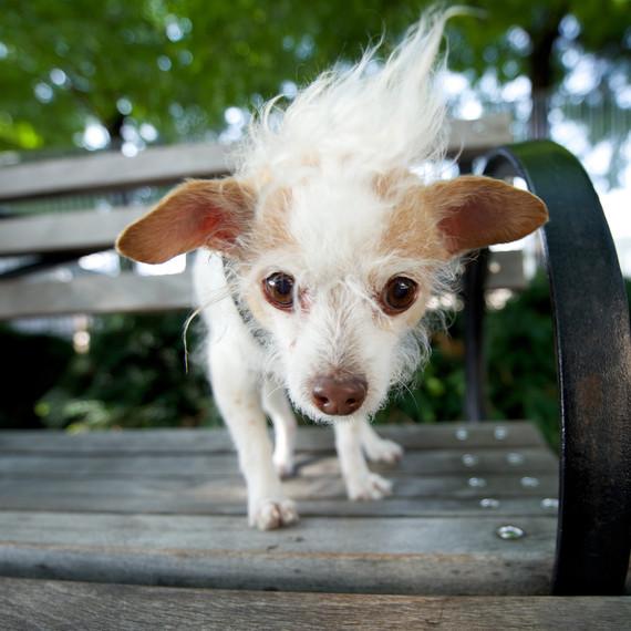 susie-senior-dogs-bench-0914.jpg