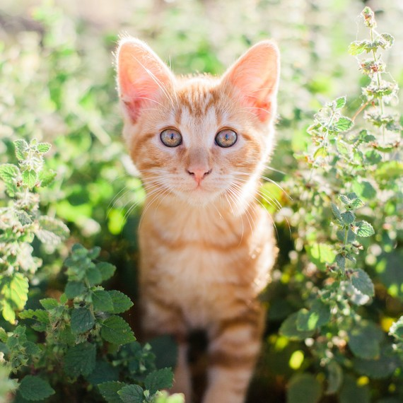 Seven Ways to Protect Your Outdoor Cat