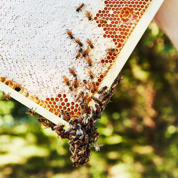 bees hive honeycomb