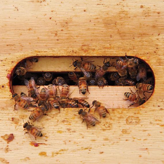 bees-ms-column-0509-mld106618.jpg