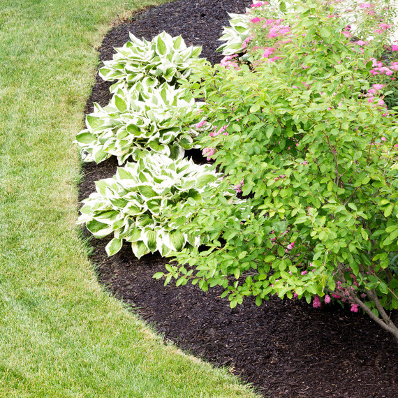 When Is the Right Time to Mulch My Garden?